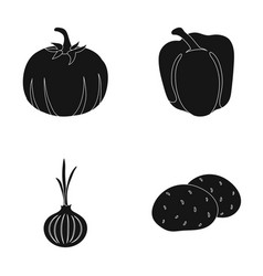 Yellow pumpkin sweet red pepper onion bitter vector