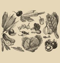 vegetable set hand drawinghealthy fresh food vector image