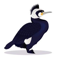 cormorant bird vector image