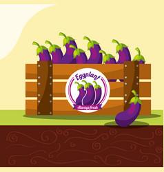 eggplant vegetable always fresh in wood basket vector image