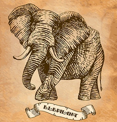 Elephant stylized engraving vector