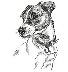 Jack russel terrier vector
