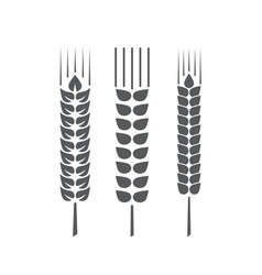 set wheat ears or rice isolated on a white vector image