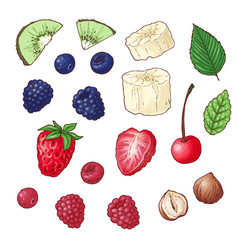 set wild berries kiwi banana nuts vector image