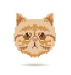 Cat head abstract isolated vector image