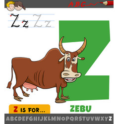 Letter z from alphabet with cartoon zebu animal vector