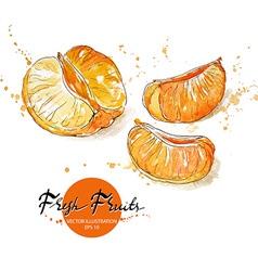 Pieces of Tangerine vector image