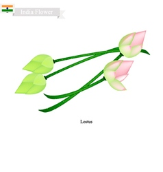 Water Lily Blossom The National Flower of India vector image