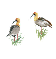 beautiful hand drawn grey birds in grass on white vector image vector image