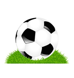 classic soccer ball on grass vector image