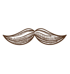moustache stylish man attribute monochrome sketch vector image