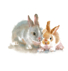 Two cute rabbits on white background watercolor vector