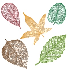 Detailed leaves vector image