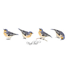 Finch bird set vector
