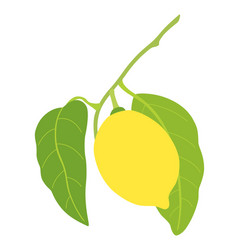 lemon with two leaves isolated on white background vector image