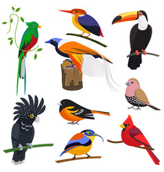 set of flat cartoon tropical exotic birds vector image