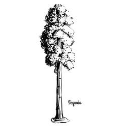 Sketch tree vector
