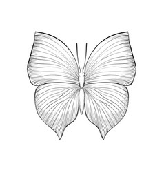 beautiful monochrome black and white butterfly vector image