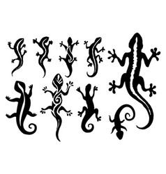 hand drawn of lizard vector image