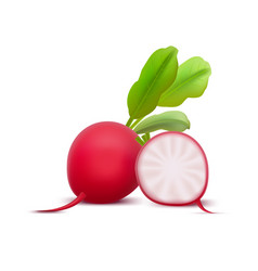 realistic 3d detailed whole radishes and half vector image