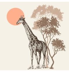 Safari sunset background nature scenery trees vector