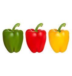 Set of red green and yellow peppers vector