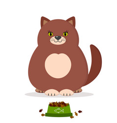 brown cat and cat food vector image