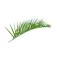 Coconut leaf iconcartoon icon vector