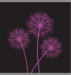 dandelion pink set vector image