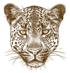 Engraving leopard face vector