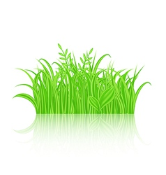 Green grass with reflection isolated on white vector image