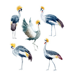 Watercolor african cranes vector