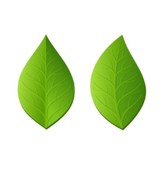 Two Green Leaves on White Background vector image vector image