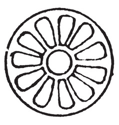 Rosette design as the knop and flower by vector