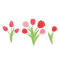 Bunch of flowers Tulip vector image