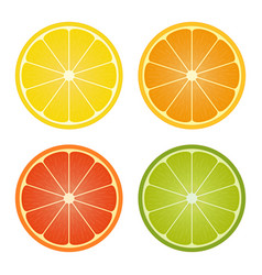 citrus fruits halves set vector image