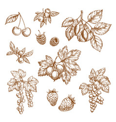 forest berries and fruits sketch icons vector image