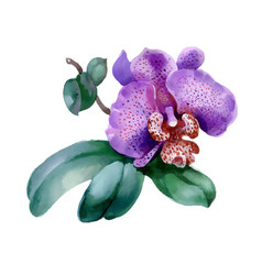 garden orchid flower on white background vector image