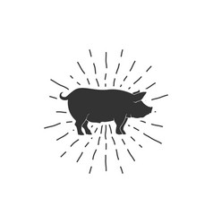 Vintage pig sunburst vector