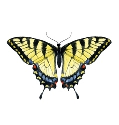 Watercolor hand drawn butterfly vector