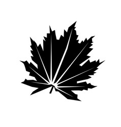 flat leaf icon isolated on white vector image vector image