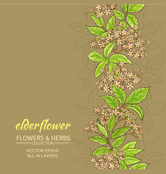 Elderflower background vector