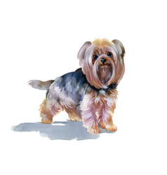 Hand drawn cute yorkshire terrier dog vector