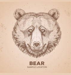 hipster animal bear hand drawing muzzle of bear vector image