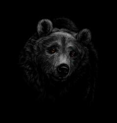 portrait a brown bear head on a black vector image
