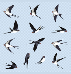 Set of many simple swallows vector