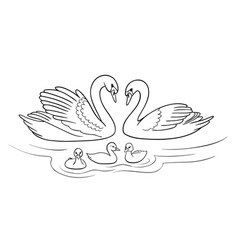 Swans family in outlines vector
