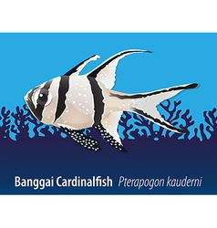 Banggai cardinalfish swimming in the sea vector image