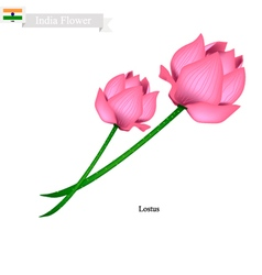 Lotus Blossom The National Flower of India vector