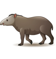 American tapir isolated on white b vector